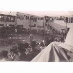 Swimming Gala, Sarafand