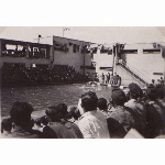 Swimming Gala, Sarafand