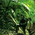 Malayan jungle, 2007