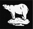 Polar Bear, 49th Division, Divisional Flash